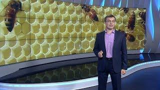 Россия на рынке мёда-2017