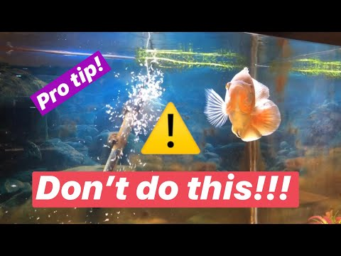 How To Feed Oscar Fish Frozen Brine Shrimp