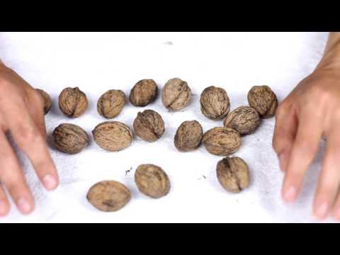 Крепкий орешек: как правильно есть орехи