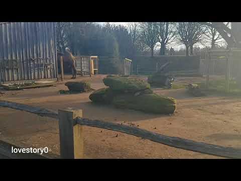 ZSL London Zoo Tour جوله في حديقه حيوانات لندن
