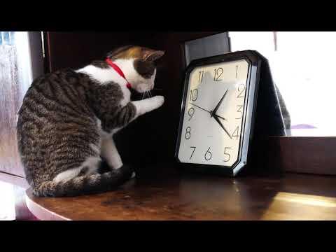 Ticking cats 4k UHD