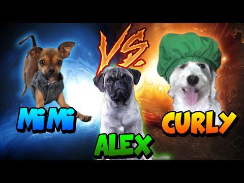 🔥Curly VS Mimi VS Alex🔥 Batalla de Perros Youtubers - Perro de Fernanfloo VS Perros de JuegaGerman
