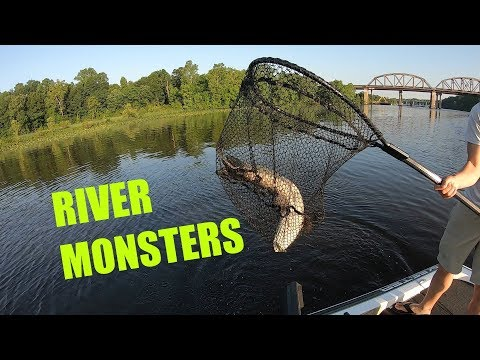 Catching Northern Snakeheads On The Potomac River