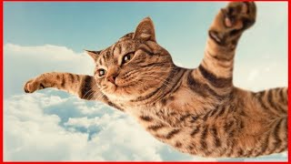 Try Not To Laugh Oct 2019 | Funny Cat Compilation | Funny Animals Videos😸😹 !!!