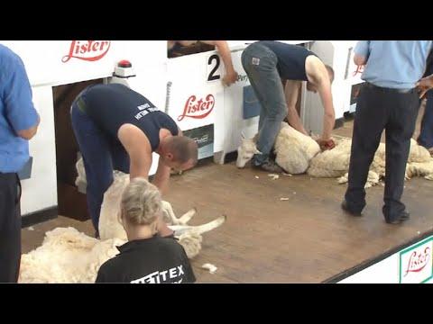 Gwellau Masnachol Agored Rhag 1 | Commercial Blade Shearing Pre 1