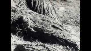 Сaucasianart.ru (док.фильм Дагестан) Третье сокровище 1986г.