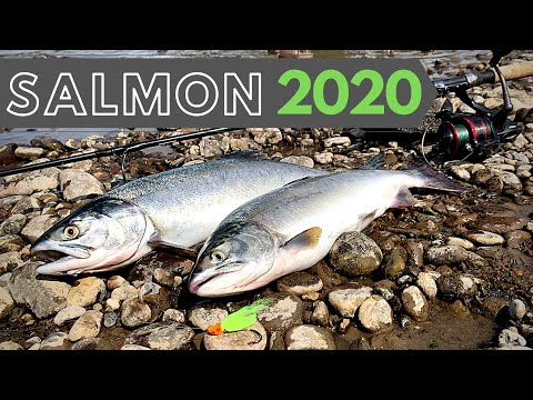 How To Drift Fish For Salmon! Puyallup River 2020