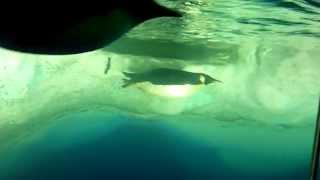 名古屋港水族館のペンギンルームです。 皇帝ペンギンは何度か見たことあ...