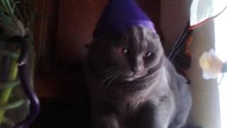 Кот Бося (Босс) - нафиг ты на меня это одел ? я шо японский кот ?