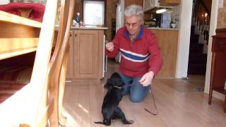Training A Puppy To Come