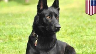 Funkcjonariusz policji uratowany przez policyjnego psa