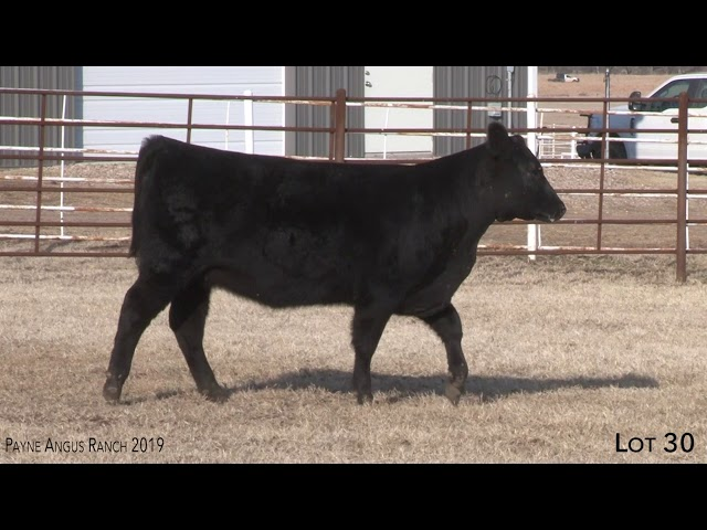 Payne Angus Ranch Lot 30
