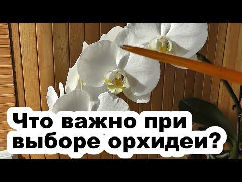 Как выбрать орхидею при покупке в магазине?