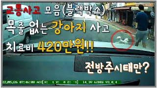 교통사고 블랙박스 영상 | 목줄 풀린 강아지 사고 운전…