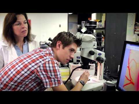 Loyola undergraduate researchers investigating joint regeneration