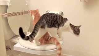 Cat Toilet Training - Day 32