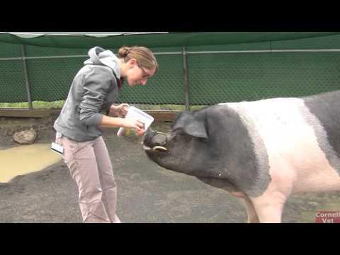 Nemo Farm Animal Hospital at Cornell University College of Veterinary Medicine