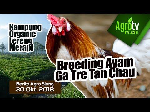 AgroNews Indonesia Live 30 Oktober 2018