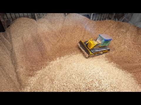 loading woodchip in camranh 1