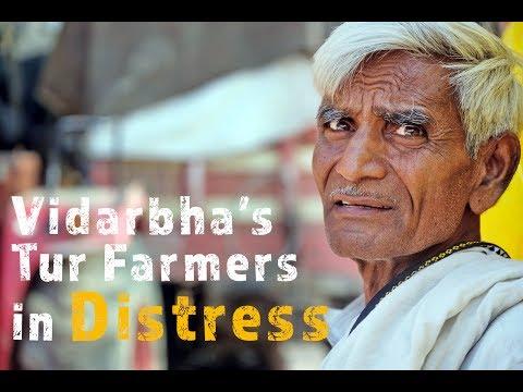 Is Modi govt to blame for tur farmers' distress in Vidarbha?
