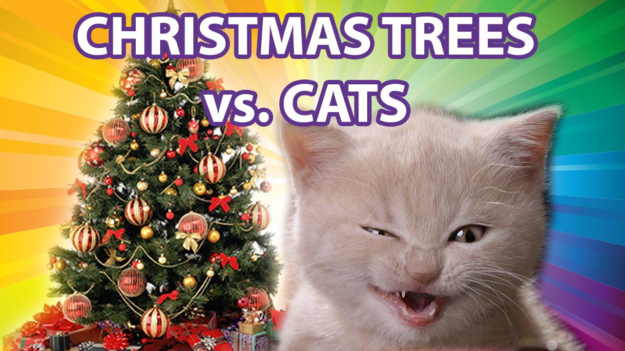 Funny Cats vs Christmas Trees - YouTube