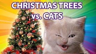 Funny Cats vs Christmas Trees