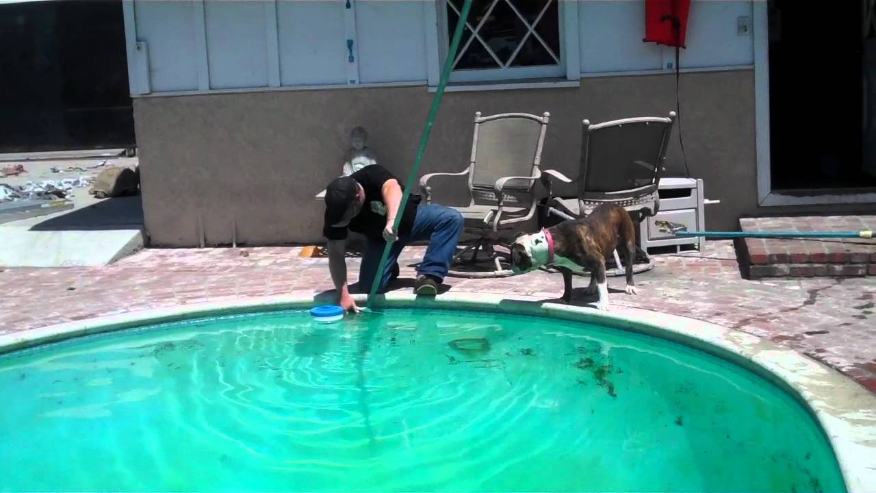 mike fish guy rescuing a bullfrog from a swimming pool youtube - Cool Indoor Pools With Fish