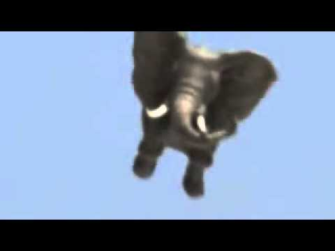 check my elephant fly in the sky