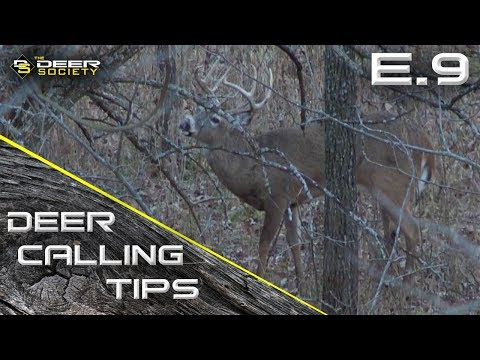 "Deer Calling Tips - E.9 ""Contact Grunts"""