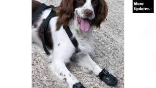 Dog Shoes Set Of Pictures And Ideas - Dog Accessories & Products