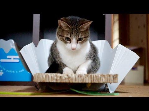 猫の「捕まえたっ!」