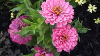 Garden Flowers Pictures | Flowers And Plants Picture Collection