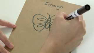 Kelly Kits: How to Draw a Butterfly/Imago