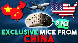 How To Buy *EXCLUSIVE* Mice From China For CHEAP! TAOBAO Tutorial Ft. Huddled