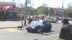 Dog vs car[http://amuzament-saptamanal.blogspot.com]
