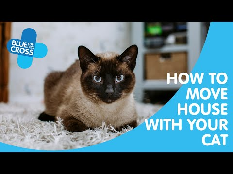 How To Move House With Your Cat | Blue Cross Pet Advice