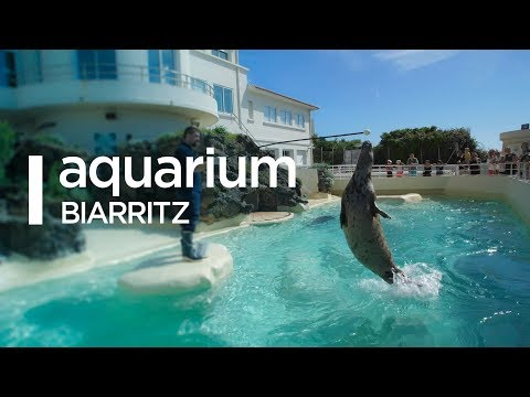 Aquarium de Biarritz 2017 - Mr.Ingalss Films