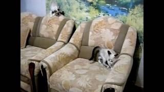 #РЖАЧНОЕ #ВИДЕО#БЕШЕНЫЕ #КОШКИ#Смешные  #котята