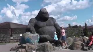 прогулка в мире животных / зоопарк Планета обезьян (07.2018)
