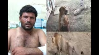 Dog saves his master from lion-attack in Gujarat