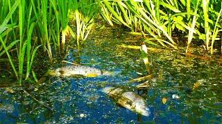 Хто травить рибу на річці Збруч. Бережанська ГЕС 2021