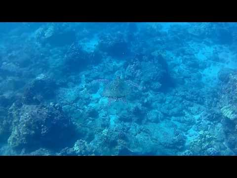 Sea Turtle at Makena Point