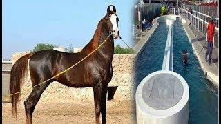 इस घोड़े की कीमत है 1 करोड़ 11 लाख...इसके ठाठ देखकर अंबानी को भी आ जाता है पसीना