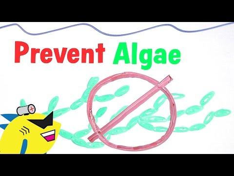 How to Prevent and Eliminate Algae in the Aquarium
