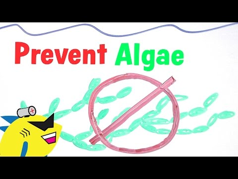 How To Prevent And Eliminate Algae In The Aquarium