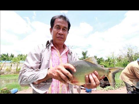 """เศรษฐีเกษตร 21/6/58 : """"การเลี้ยงปลา"""" แบบประหยัดต้นทุน"""