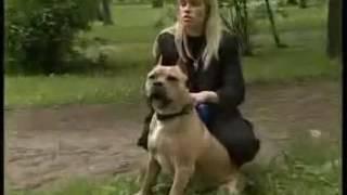 """""""Специальный репортаж"""":Бойцовые собаки"""