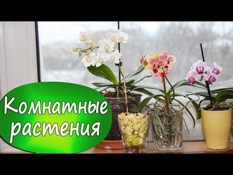 11. Цветут мои орхидеи! Детка растит цветонос! Желтый лист на орхидее. Фаленопсис в стекле