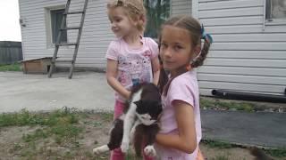Коты которые живут на улице Лето в деревне Cats who live on the street  Summer in the village