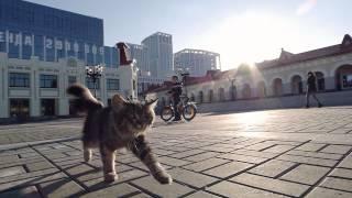 Прогулка Кота по Уфе/ Cat walks